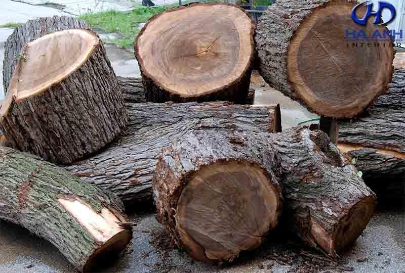 Gỗ óc chó là gì? Công dụng của gỗ óc chó có tốt không