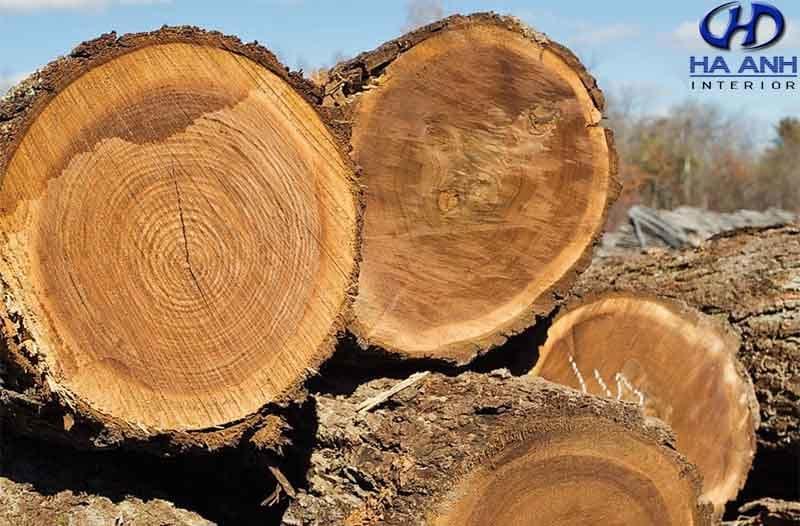 gỗ óc chó giá bao nhiêu? nội thất gỗ óc chó hà anh